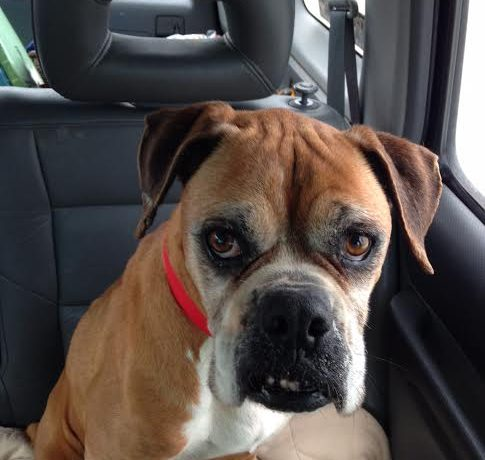 Candy – adopted!
