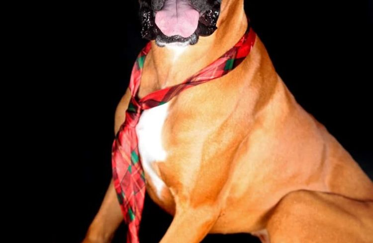 Bosston – Adopted!
