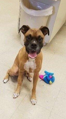 Max – adopted!