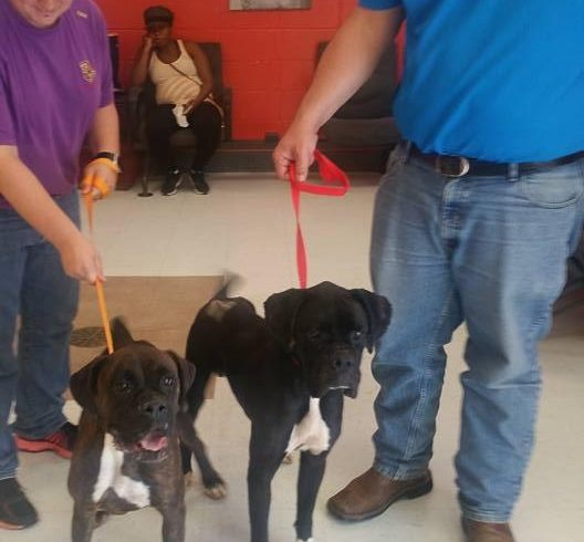 Polly – Adopted!
