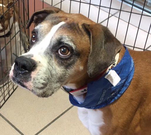 Finn – Adopted!