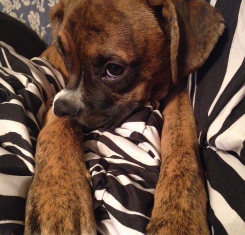 Jovie – Adopted!