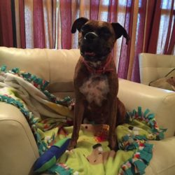 Thank You to Blanketing Boxers with Love!