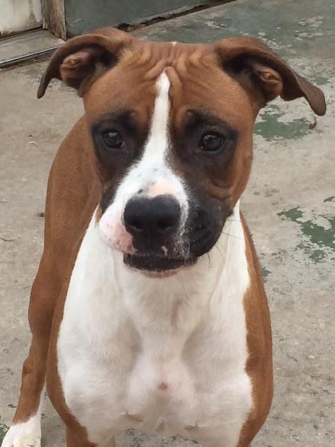 Meghan – Adopted!