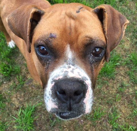 Rickie – Adopted!
