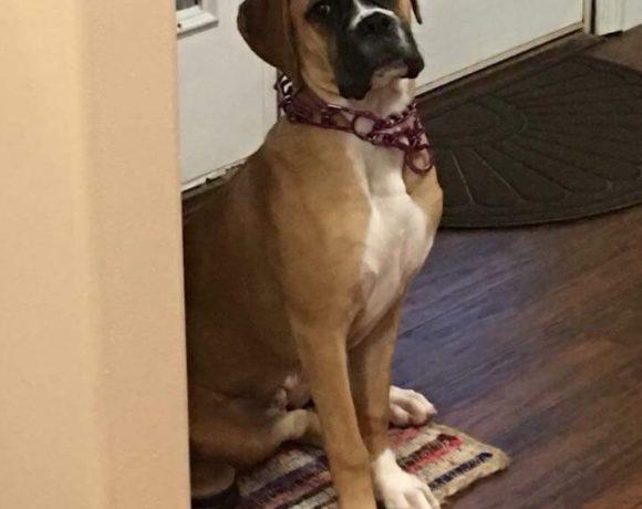 Sadie – Adopted!