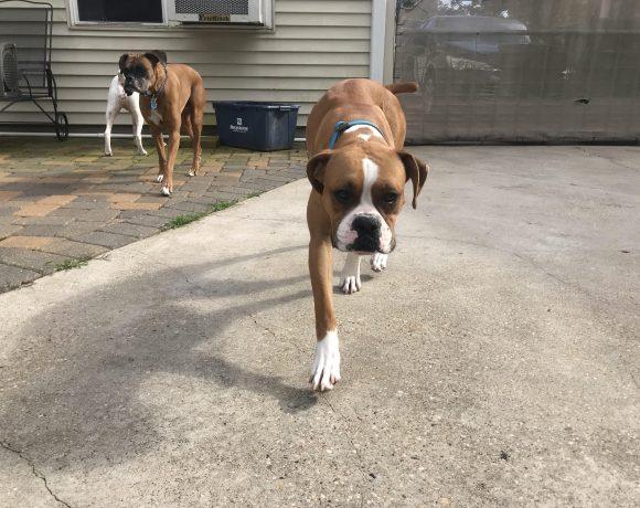Jackie – Adopted!