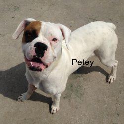 Petey