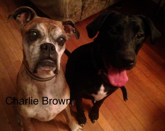 Charlie Brown – Adoption Pending