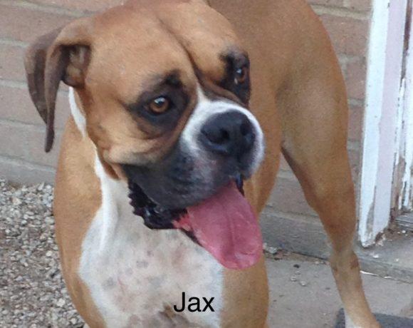 Jax – Adopted!