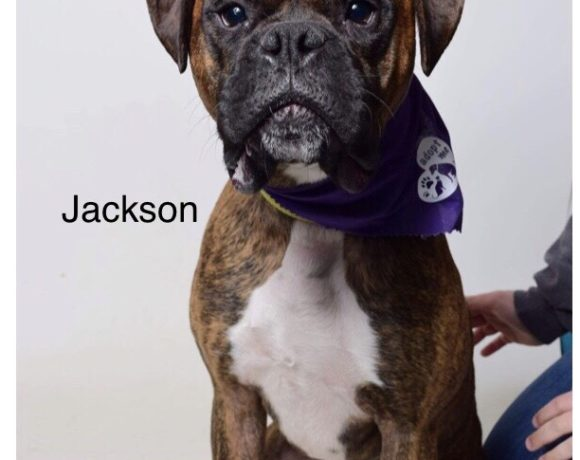 Jackson – Adopted!