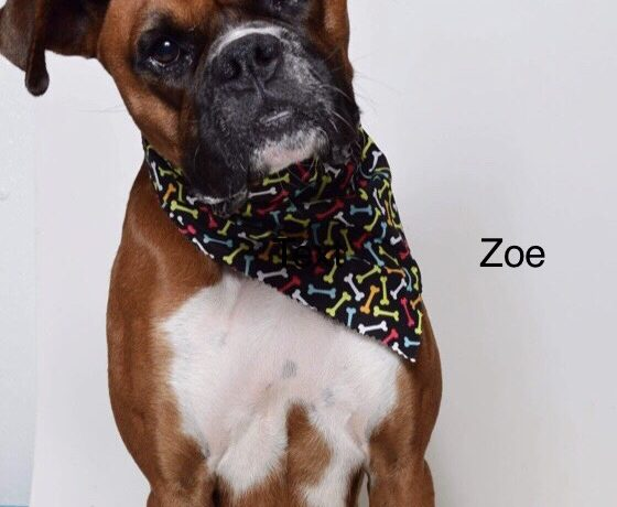 Zoe – Adoption Pending