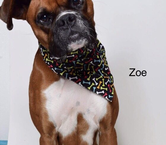 Zoe – Adopted!