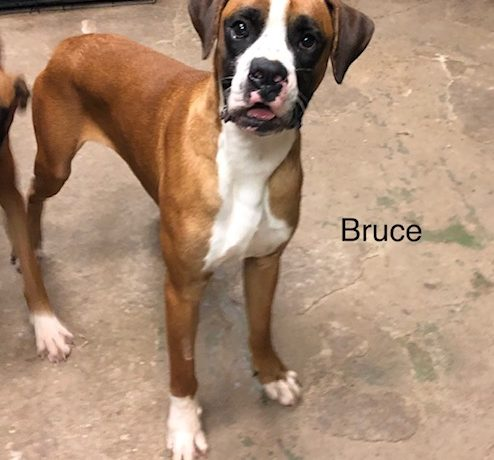 Bruce – Adopted!