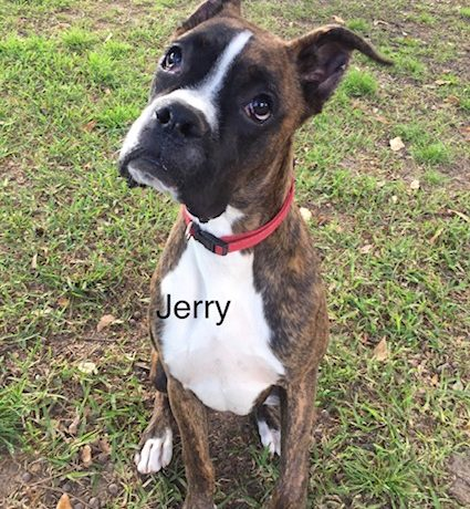 Jerry – Adopted!