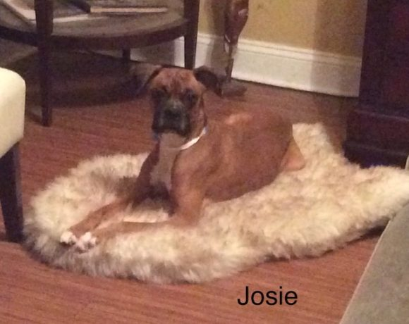 Josie – Adopted
