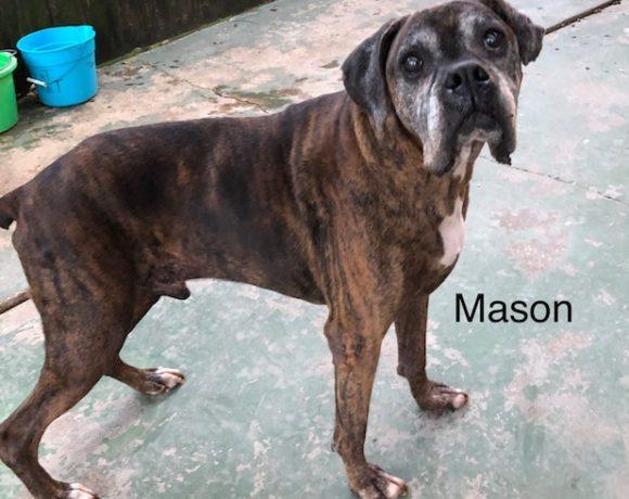 Mason – Adopted!