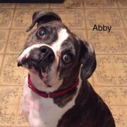 Abby – Adopted!