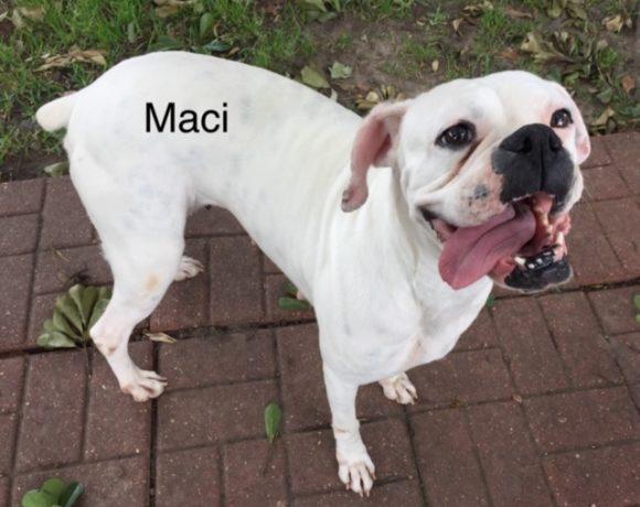 Maci – Adopted!