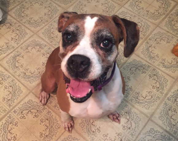 Bree – Adopted!