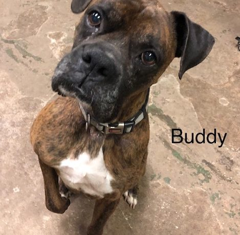 Buddy – Adopted!