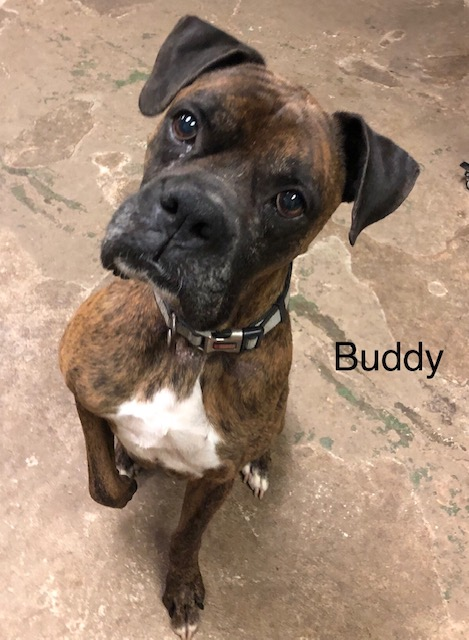 Available Rescues - Louisiana Boxer Rescue