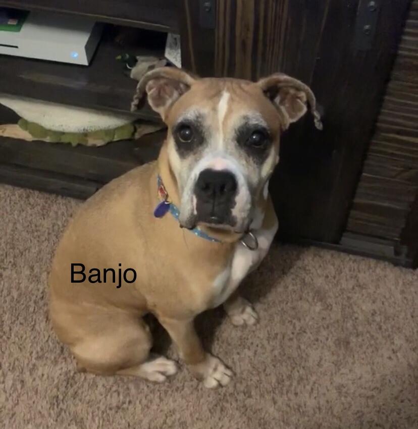 Banjo – Adopted!