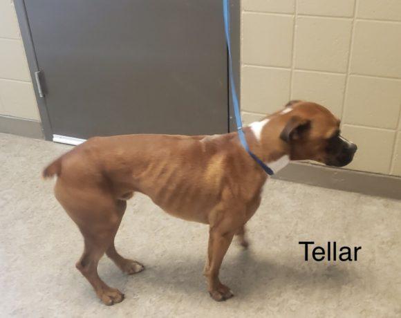 Tellar – Adopted!