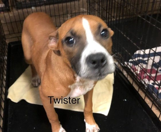 Twister – Adopted!