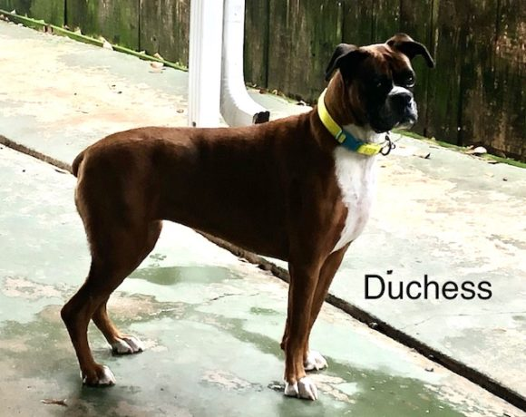 Duchess – Adopted!