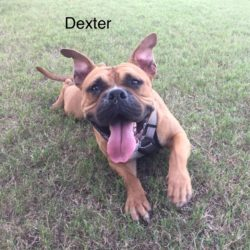 Dexter – Adopted!
