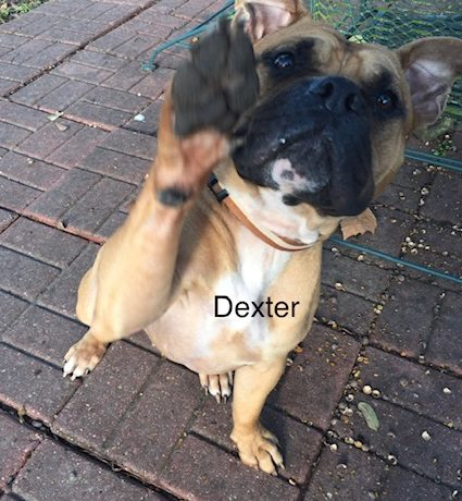 Dexter – Adopted!