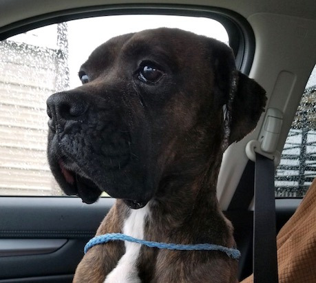 Tommy – Adopted!