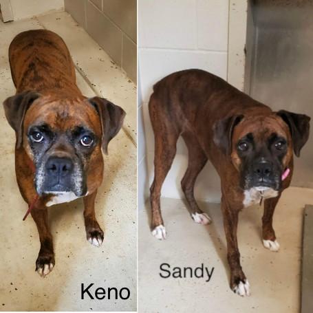 Keno & Sandy – Adopted